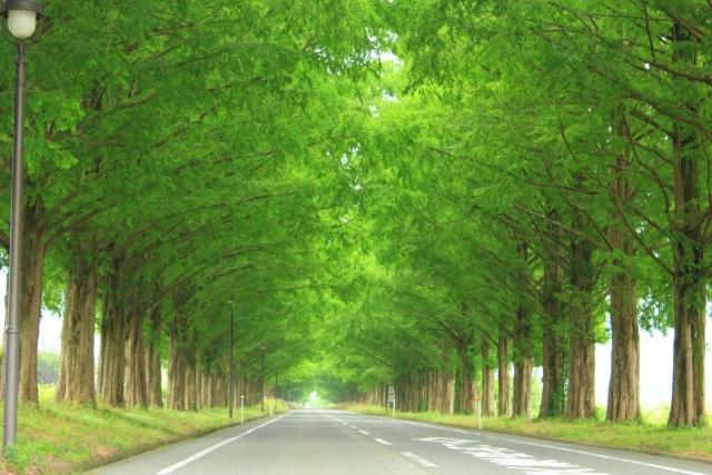 きれいな並木道の画像